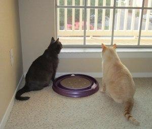 Kitties at the window