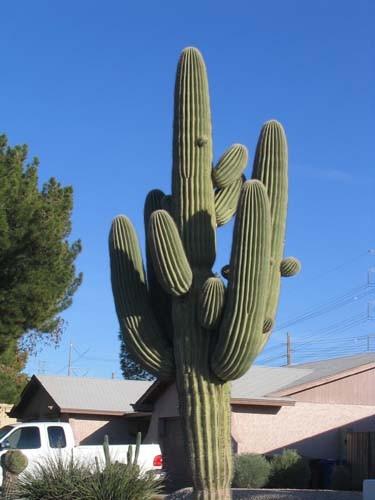 I miss the giant Saguaro cactuses, too