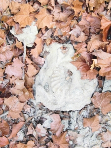 A fossil amongst the fallen leaves in the creek-bed