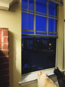 Nounours and Ronnie James love the cool night air, too.