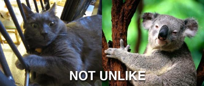 Ronnie James (aka Wrah-Wrah) on the left. Koala bear on the right. = KoWrahWrah bear. NOT UNLIKE.