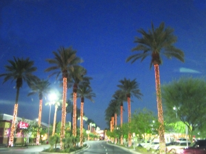 Phoenix date palms lit up for the holidays