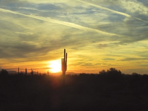 Another telltale sign: saguaros, particularly when silhouetted against a blazing sunset.