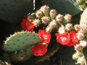 Spring in the desert is always the dawn!