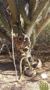 Hey there, Stranger! Welcome home to the Land of AZ. (No one sculpted this cactus to look this way, by the way)