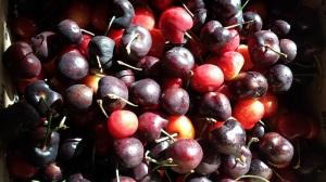thatasianlookingchick.com-cherries