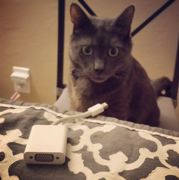 HAI. I CAN HAZ UR ADAPTER.