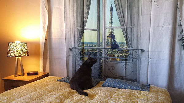 "Ronnie James gazing at the Eiffel Tower in our Paris-inspired guest bedroom... don't tell my parents he was on ""their"" bed, haha!"
