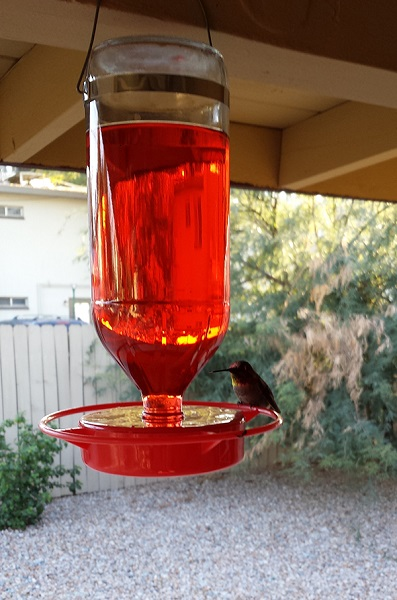Hummingbirds, like this little guy...