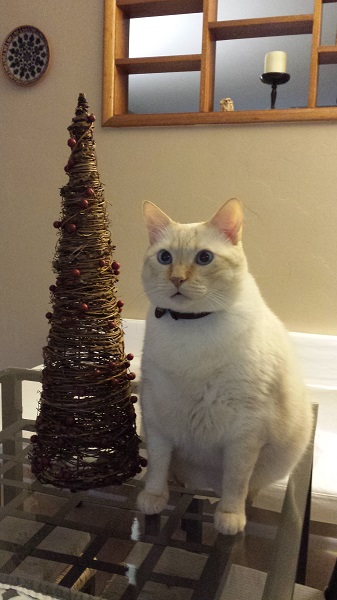 Pretending to be a tree kitty of the Nounours persuasion.
