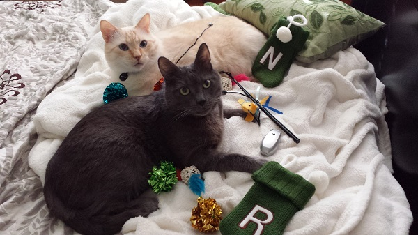 Kitties with their Christmas stocking stuffers! They do yoga every day.