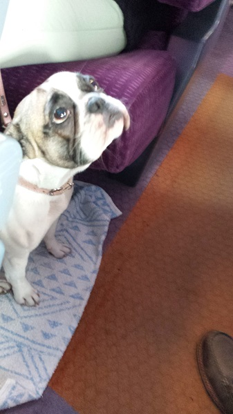 This sweet little girl was on our train to Cannes this morning. Her Mommy said I could take her picture. I love French Bulldogs.