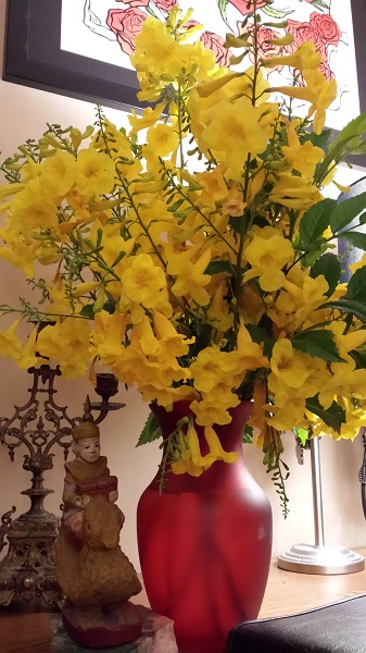 Fragrant Arizona Yellow Bells on my desk at home.