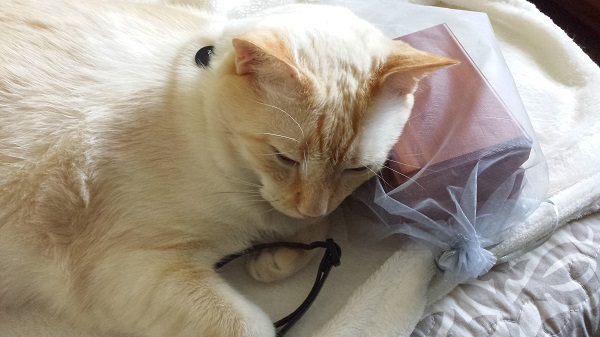 When I placed the Wrah-Wrah's urn and collar at the foot of the bed, Nounours went to them. We found him like this, holding the Wrah-Wrah's collar close to him.