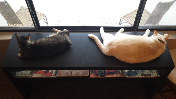 This was the first time we witnessed Nounours and Nenette being companionable, lounging together at the living room window after breakfast.