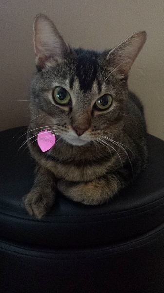 Nenette on the small round ottoman in the bedroom (7/6/2015)