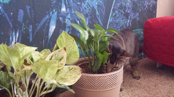 Nenette getting up close and personal with Barclay the plant.