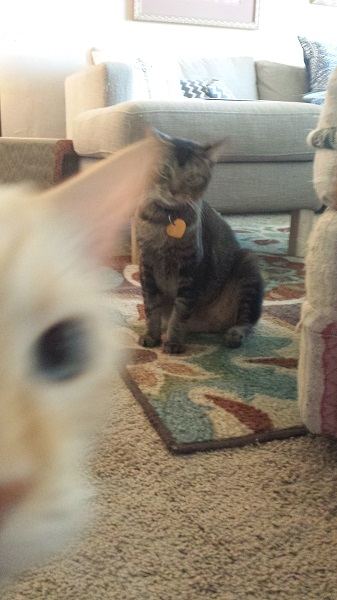 Nounours, the blue-eyed photobomb master!