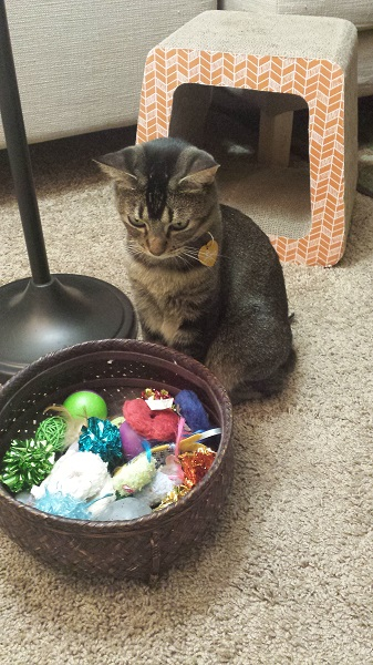 So many toys! Too many decisions! Just like the Wrah-Wrah.