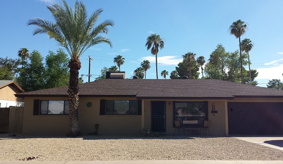 Behold our newly trimmed palm tree and our grass-free, roach-free front yard.