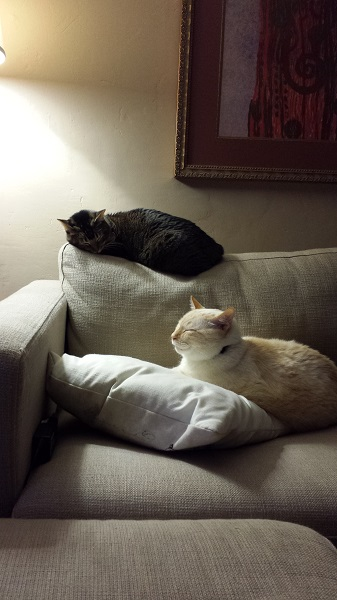 It's funny how these two often sit near each other on this end of the couch.