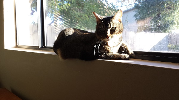 Nenette in her favorite windowsill sunbeam on a cold day.