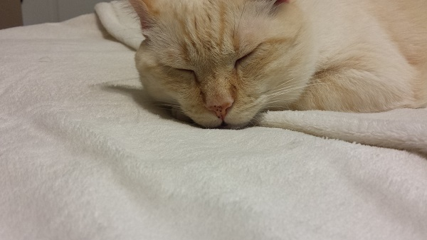 Sleepy Nounours and his little pink freckled nose.