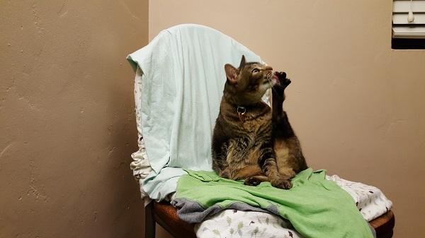 Nenette cleaning her feet at bedtime.