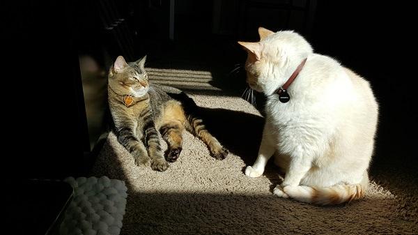 Nenette and Nounours enjoying a sunbeam.