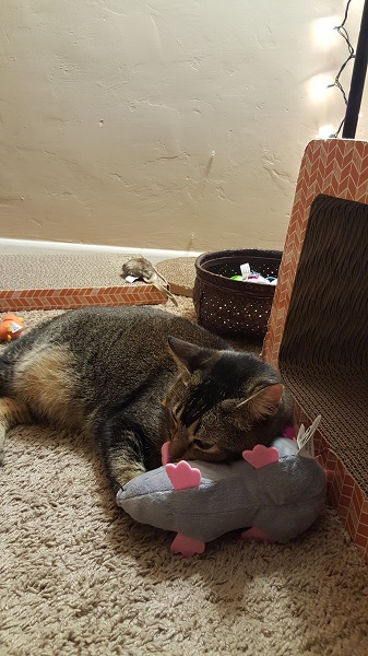 Nenette and her rat pillow.