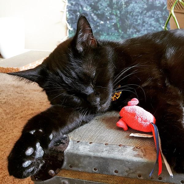 "Cita, ""Cat with big paw"""