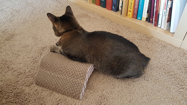 """When Nenette doesn't hear her name. """"Cat draped over a living room speed bump"""""""