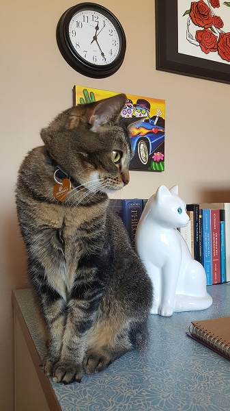 """Nenette: """"WHY does this weird white cat copy everything I do?!"""""""