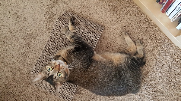 Obligatory upside-down kitty pic.