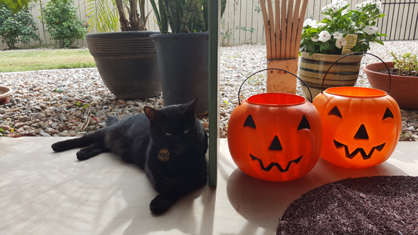Cita with Jack-O-Lanterns