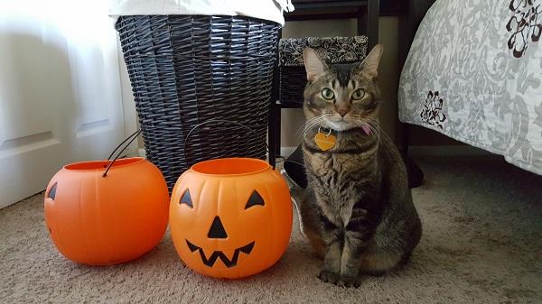 Nenette with Jack-O-Lanterns