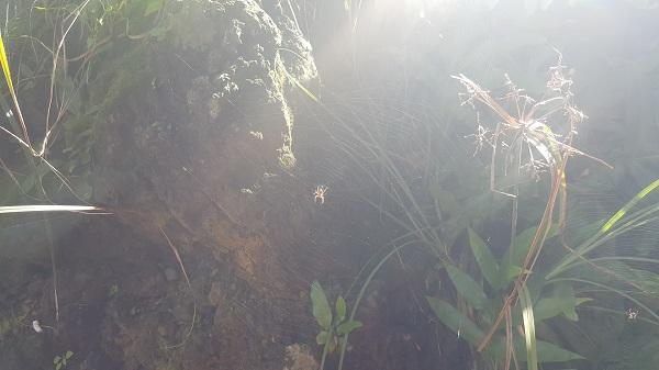 Little spider!