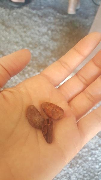 Cacao (chocolate)