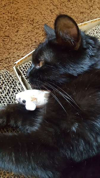 Cita snuggling with her favorite mousie.