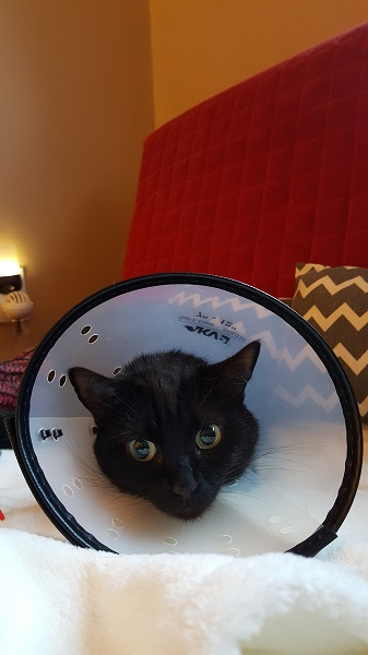 Cita with cone - first attempt